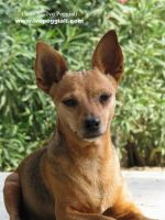 Loonie, my dog